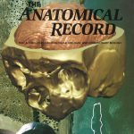 Anatomical Record 276A, No. 2, 2004