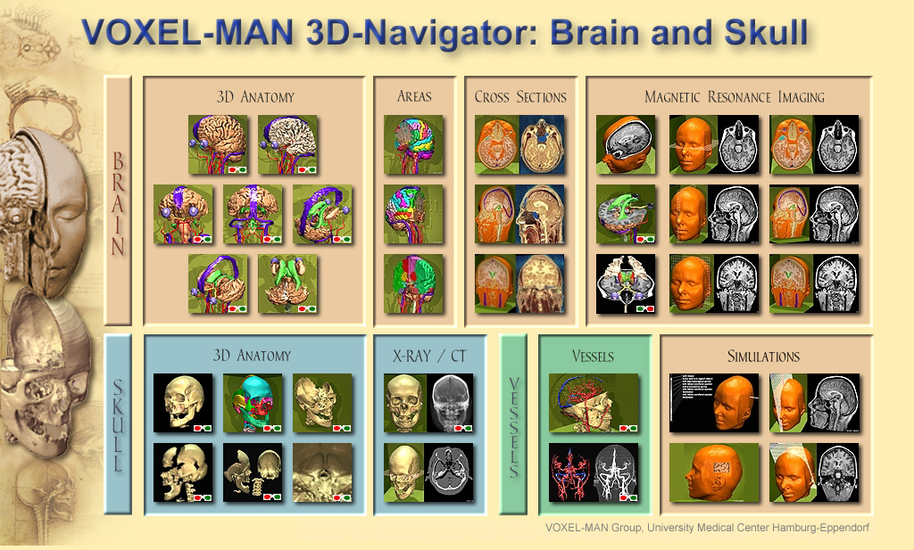 Table of Contents of the Voxel-Man 3D-Navigator: Brain and Skull