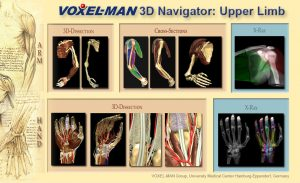 Table of Contents of the Voxel-Man 3D-Navigator: Upper Limb