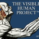 Logo of the Visible Human Project