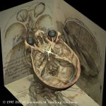 Optic nerves of the Visible Human according to Leonardo da Vinci